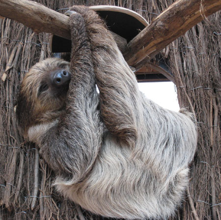 sloths deserve your love