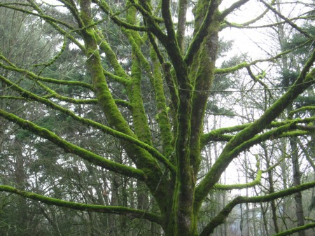 moss-covered tree branches