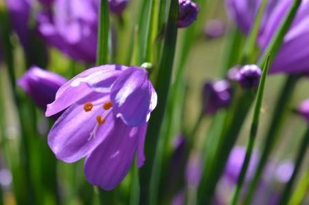 glistening purple flower