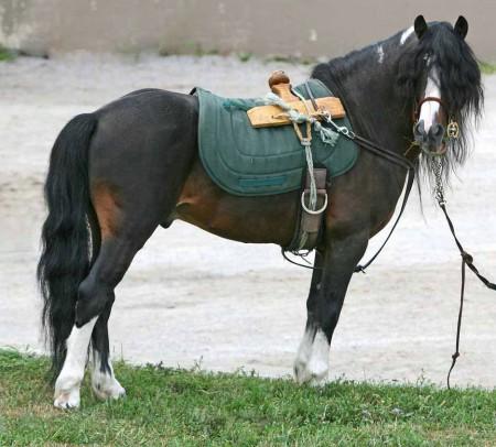 bog pony
