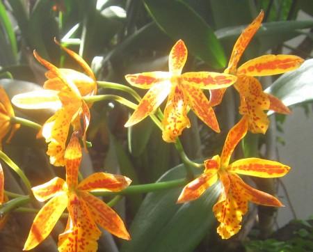 sunshine brings spring flowers