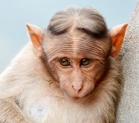 funny-looking monkey