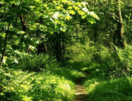 narrow path is heaven's gateway